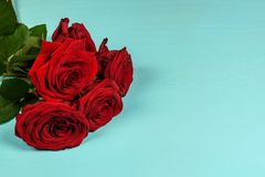 Bouquet of beautiful red roses on a blue background close-up royalty free stock photos