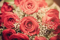 Bouquet of beautiful red roses. Selective focus Stock Photography