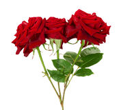 Bouquet of beautiful red roses on the white background Stock Photo