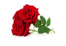 Bouquet of beautiful red roses on the white background Stock Image