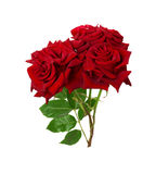 Bouquet of beautiful red roses on the white background Stock Photography