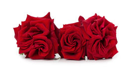 Bouquet of beautiful red roses on the white background Stock Photos