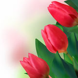 Bouquet of beautiful red tulips. EPS 8 Stock Image