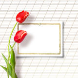 Bouquet of beautiful red tulips Stock Photo