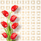 Bouquet of beautiful red tulips Royalty Free Stock Images