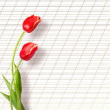 Bouquet of beautiful red tulips Royalty Free Stock Photos