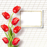 Bouquet of beautiful red tulips Stock Photos
