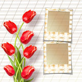 Bouquet of beautiful red tulips with slides Royalty Free Stock Photos