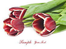 Bouquet of beautiful red tulips on white background Royalty Free Stock Photos