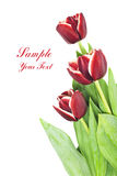 Bouquet of beautiful red tulips on white background Stock Images