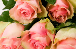 Bouquet of beautiful roses Royalty Free Stock Photography
