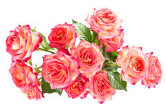 Bouquet of beautiful roses. Stock Photography