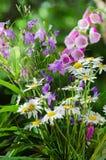 Bouquet of beautiful summer flowers Stock Photos