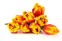 Bouquet of beautiful tulips. The red yellow bouquet of beautiful tulips on white Stock Image