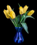 Bouquet of beautiful tulips in blue vase isolated on black Royalty Free Stock Photography