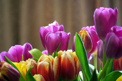 Bouquet of beautiful tulips close up Stock Image