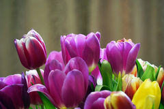 Bouquet of beautiful tulips close up Stock Photography