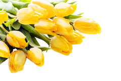 Bouquet of beautiful vivid yellow tulips Stock Image