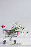 Bouquet of beautiful white snowdrops in small supermarket trolle Royalty Free Stock Image