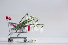 Bouquet of beautiful white snowdrops in small supermarket trolle Stock Images