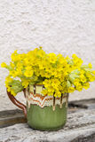Bouquet of beautiful wild primroses flowers in a vintage clay cup Stock Photos