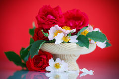 Bouquet of beautiful wild roses Royalty Free Stock Photo