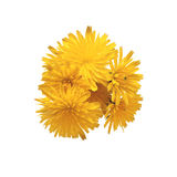 Bouquet of beautiful yellow colors Royalty Free Stock Image