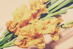 Bouquet of beautiful yellow gladiolus Royalty Free Stock Photos