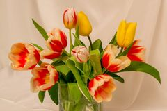 Bouquet of beautiful yellow and red-white tulips royalty free stock photo