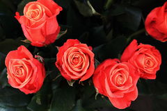 Bouquet beautifully colored roses Stock Photography