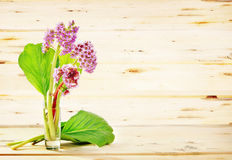 Bouquet of Bergenia flowers against wooden background Stock Image