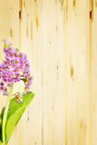 Bouquet of Bergenia flowers against wooden board Royalty Free Stock Photo