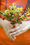 Bouquet of berries. In the hands of women stock image