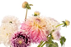 Bouquet of dahlia flowers isolated on a white background Royalty Free Stock Photos