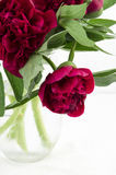 Bouquet big red peonies from the garden in a glass jug. Stock Photography