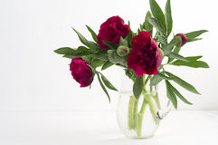 Bouquet big red peonies from the garden in a glass jug. Stock Photos