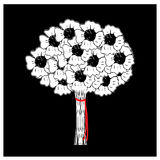 Bouquet of black and white poppies with red ribbon Stock Images