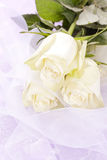 Bouquet blanc de roses Images stock