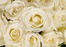 Bouquet blanc Wedding de Rose Photos stock