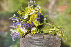 Bouquet of blooming forest flowers Stock Image