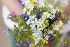Bouquet of blooming forest flowers in woman`s hands royalty free stock images