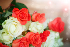 Bouquet of blooming roses Stock Image