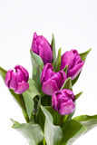 Bouquet of blooming spring flowers violet tulips Stock Image