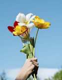 Bouquet of blooming tulips  in woman's hands on a blue sky background Stock Photos