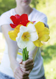 Bouquet of blooming tulips  in woman's hands Royalty Free Stock Images