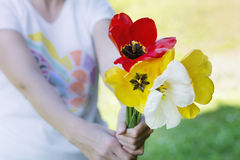 Bouquet of blooming tulips  in woman's hands Stock Photo
