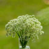 Bouquet of blooming wild flowers in a vase. On a blurred green background Royalty Free Stock Photo