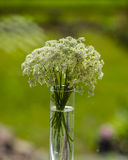 Bouquet of blooming wild flowers in a vase. On a blurred green background Stock Photo