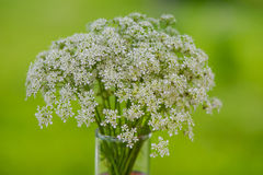 Bouquet of blooming wild flowers in a vase. On a blurred green background Stock Photography