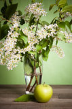 Bouquet of a blossoming cherry in a vase Royalty Free Stock Photography
